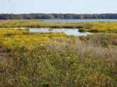 Yellow Flowers on the lake (pic taken by Joe)
