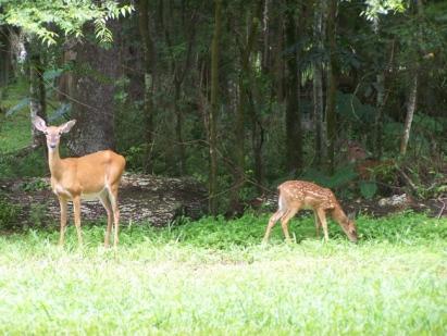 Barefoot_Justines_Deer3
