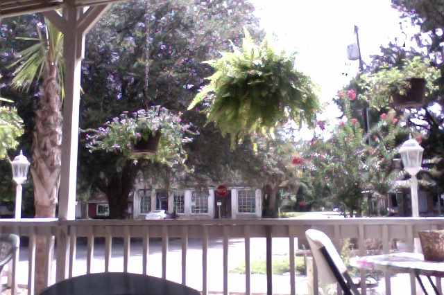 My view of Micanopy