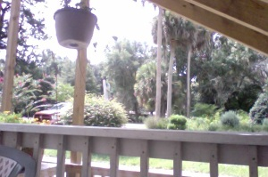 My view of Micanopy (side)